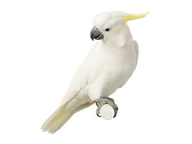Mali žutoćubi kakadu