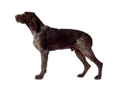 Pudlepointer