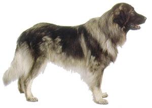 Šarplaninac (YU ovčarski pas)